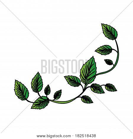 white background with colorful green creeper vector illustration