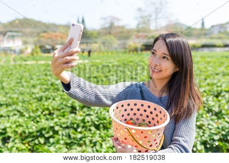 Woman Picking strawberry and taking selfie