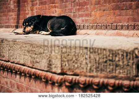 A dog sleeps on the steps of one of the temples in Durbar Square Kathmandu