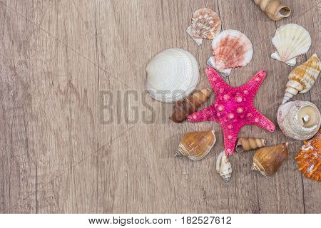 Sea shells on wooden background. top view close up.