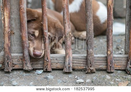 Closeup puppy in the wood cage background