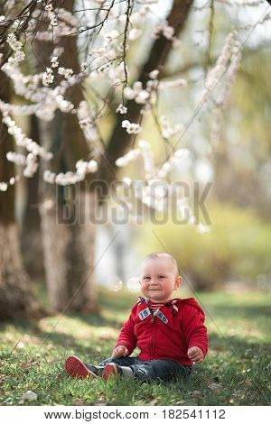 Baby in blooming apricot garden. Boy sitting on grass among flowering apricot trees.