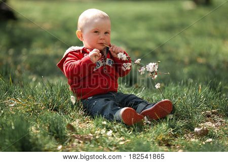 Baby is sitting on grass and gnawing flowering branch of apricot tree. He holds twig in his hands and bites it.