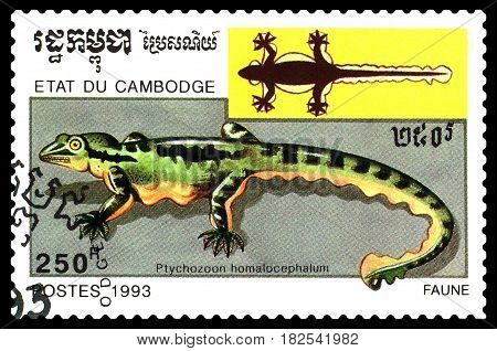 STAVROPOL RUSSIA - April 17 2017 : A Postage Stamp Printed in the Cambodia Shows Ptichozoon homalocephala (Ptichozoon homalocephalum) circa 1993