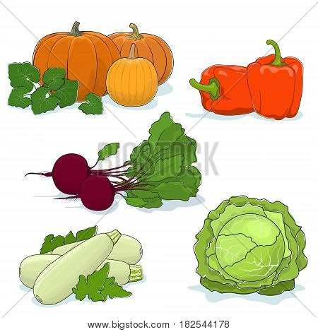 Fresh Gardening Vegetables Isolated on a White Background, Orange Bell, Peppers and Pumpkin, Zucchini Courgette and White Cabbage, Beetroot ,Vector Illustration