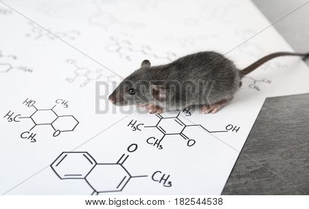 Cute rat on table in laboratory