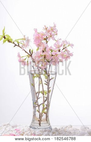 Pink cherry flower in vase ,petals, on white stones background