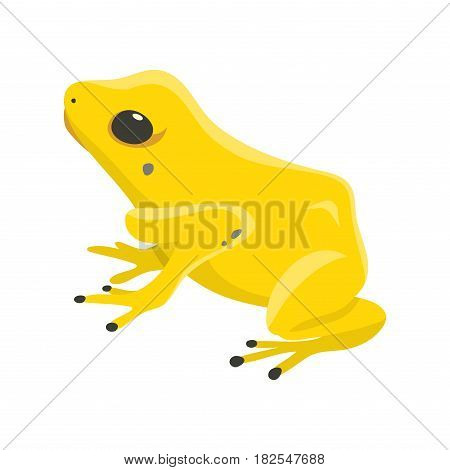 Poisonous frog poison dartfrog phyllobates terribilis a dangerous animal from the tropical rain forest of australia vector illustration. Toxic amphibian with bright yellow and orange colors