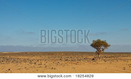 Lone Tree In Stone Desert, Sahara, Libya