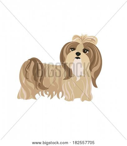 Funny dog pale cream Yorkshire terrier