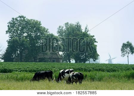 Typical Frisian Landscape