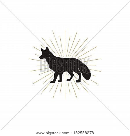 Hand drawn Fox Silhouette illustration. Vintage Black fox with sunbursts isolated on white background. Good for tee shirt, clothing prints, mugs, travel pennant designs. Stock vector