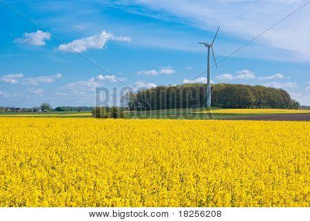 Rapsfeld und Windkraftanlage