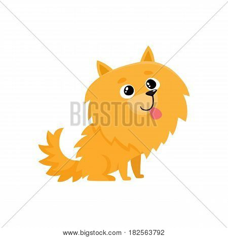 Cute little long haired Pomeranian, spitz dog character, cartoon vector illustration isolated on white background. Nice and friendly little spitz dog character, Pomeranian breed, cartoon illustration