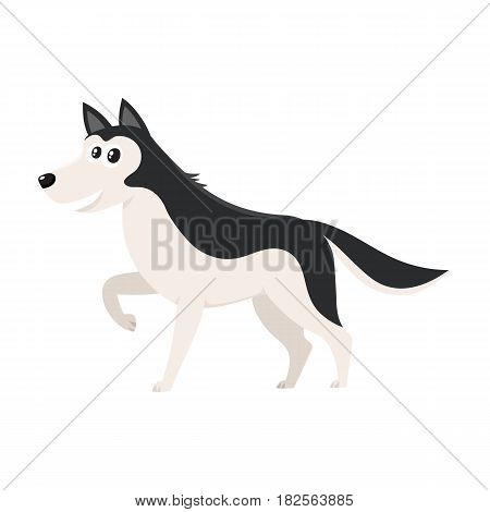 Cute black and white Husky dog character with raised paw, cartoon vector illustration isolated on white background. Funny husky dog character, one paw raised, mouth open, colorful cartoon illustration
