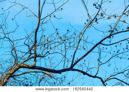 Bare branches of the autumn tree on the background of the clear sky
