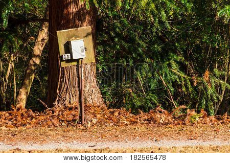 The switch box on the background of the big pine tree in the Lullwater Park Atlanta USA