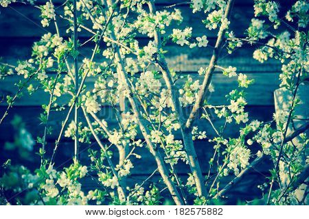 White Spring Blooming Trees Retro