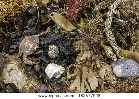 Beachcombing find. An assortment of marine life and coastal debris as a background image.