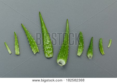 Different Size Of Aloe Vera Leaves On Gray Background. Skin Care Ingredients And Rejuvenation Concep
