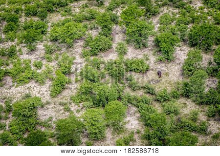 Aerial View Of A Hippo In The Okavango Delta.