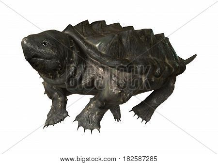 3D Rendering Alligator Snapping Turtle On White