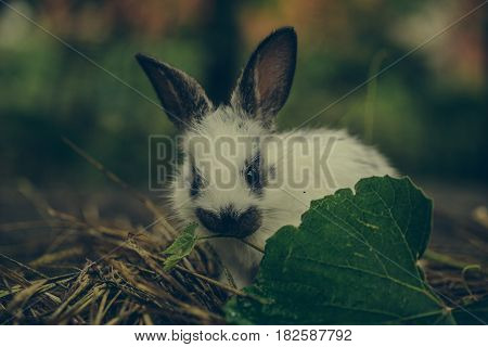 Cute Rabbit Sitting In Hay And Green Leaves