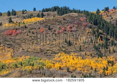 the scenic landscape of the Wyoming mountains in fall
