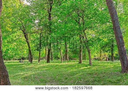 Green deciduous forest on a sunny summer day
