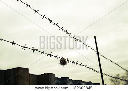 Barbed wire on a guarded object, against a cloudy sky background