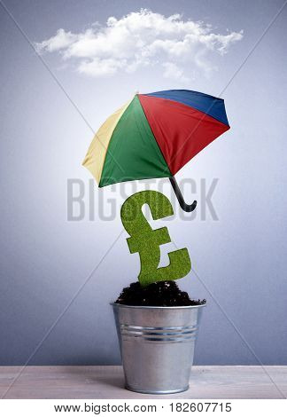 Pound sterling sign plant growing in a pot protected with an umbrella