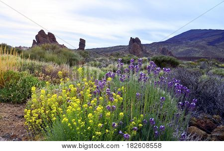 Beautiful view of Teide National Park in Tenerife,Canary Islands,Spain.