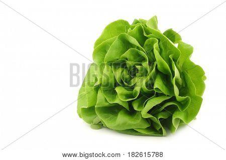 fresh lettuce on a white background