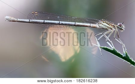 Image of the dragonfly on leaf - macro