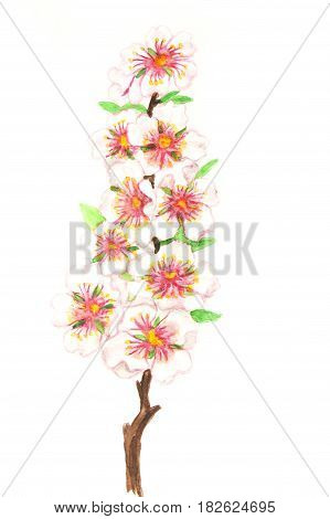 Branch of tree with white flowers  in spring blossom, illustration painting watercolor.