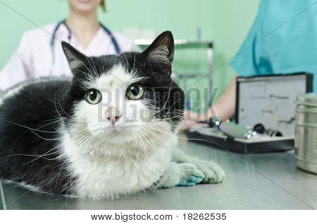 Cat To The Vet