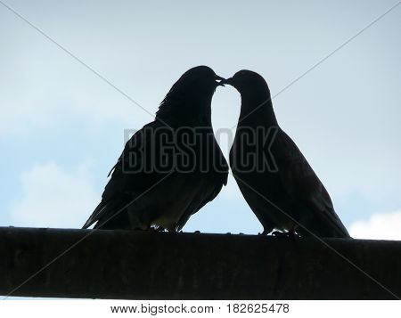 Dark silhouettes of two kissing pigeons against the sky