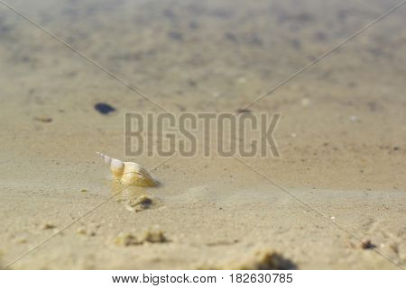 Shell in white sand at water's edge