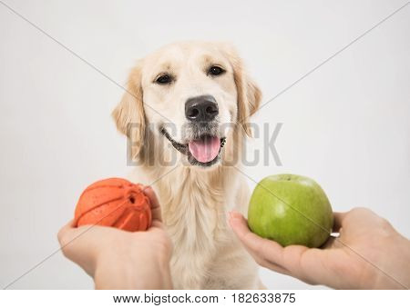 A man offers a dog to make a choice. A dog thinks about a game or food
