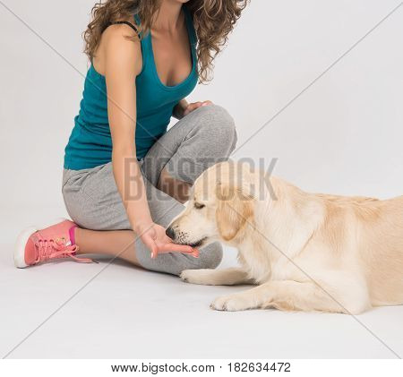 Girl in green T-shirt is feeding from the hands of a golden retriever on a white background. The dog receives a reward for obedience