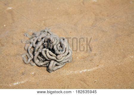 Arenicola Marina Or Lug Worm