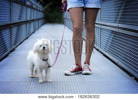 cute dog after long walk