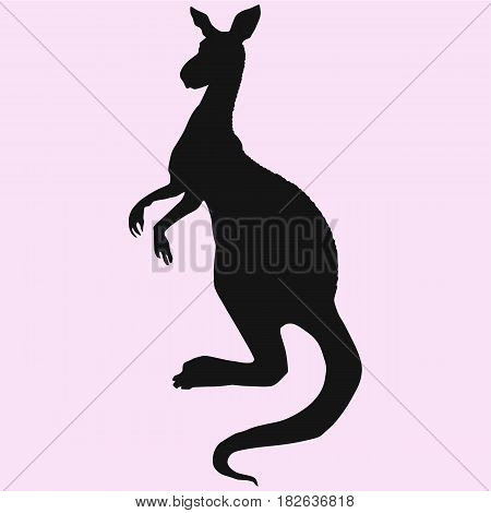 kangaroo vector silhouette isolated on pink background