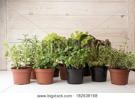 Herbs And Lettuces In Flowerpots On White Wooden Background.