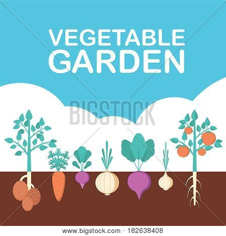 Vegetable garden banner. Organic and healthy food. Poster with root veggies. Flat style, vector illustration.