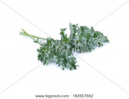 fresh Green Kale on a white background