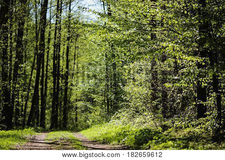 Juicy green leaves on the trees. Spring green landscape. The sun shines brightly in the clear blue sky. Snowdrops on the green ground. White spring flowers. Beautiful green trees. Green nature. Green background