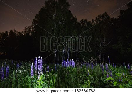 Blue fantastic lupines on field. The beautiful night fantastic scenery. Slow shutter speed. Spectacular clear starry fantastic sky. Scenic view. The light from the lantern on the grass and fantastic flowers