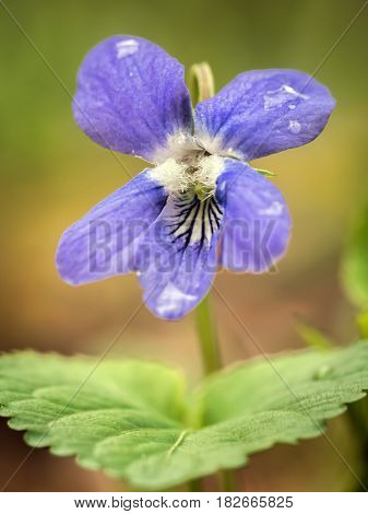 Shot of single violet flower
