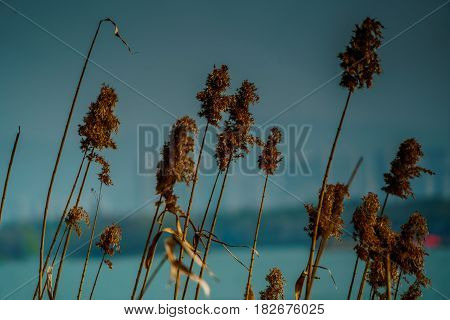 Close up flower grass on blue sky and river background
